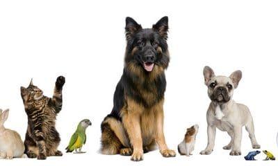 Assurer votre animal de compagnie : est-ce utile ?