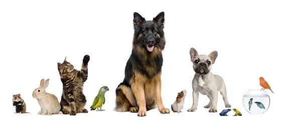 Assurer votre animal de compagnie